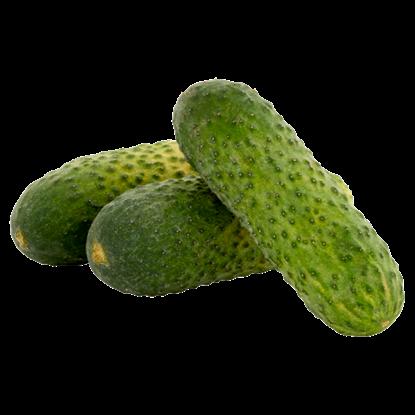 Kép Kovászolni való uborka lédig